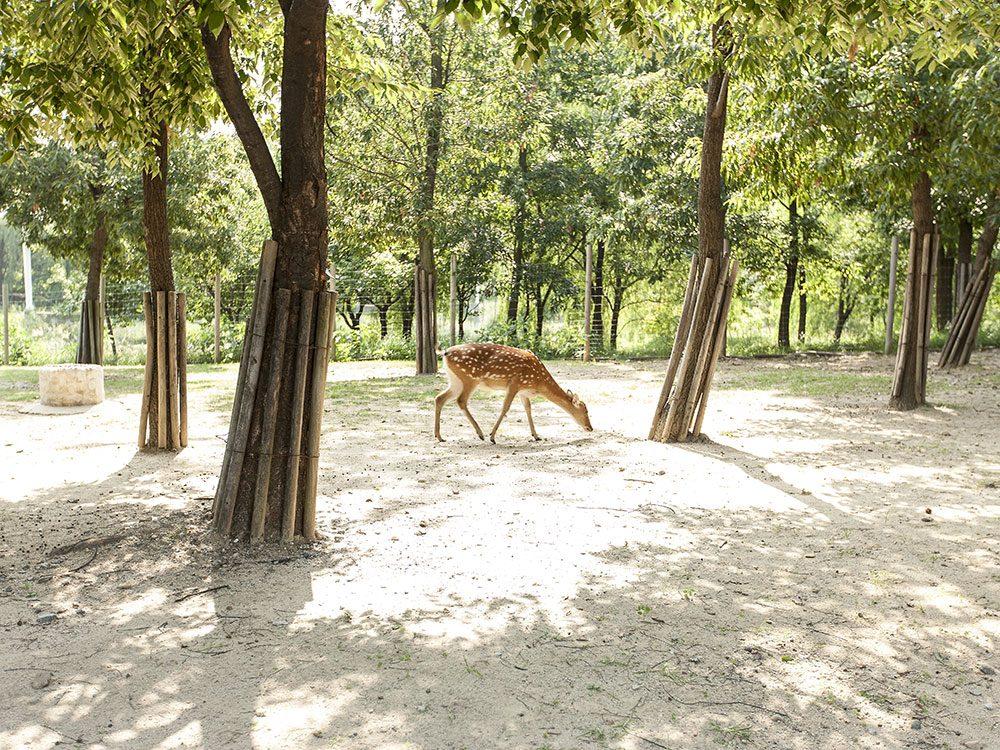 Deer in Seoul Forest Park