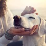 These Are 4 Sure Signs Your Dog Trusts You