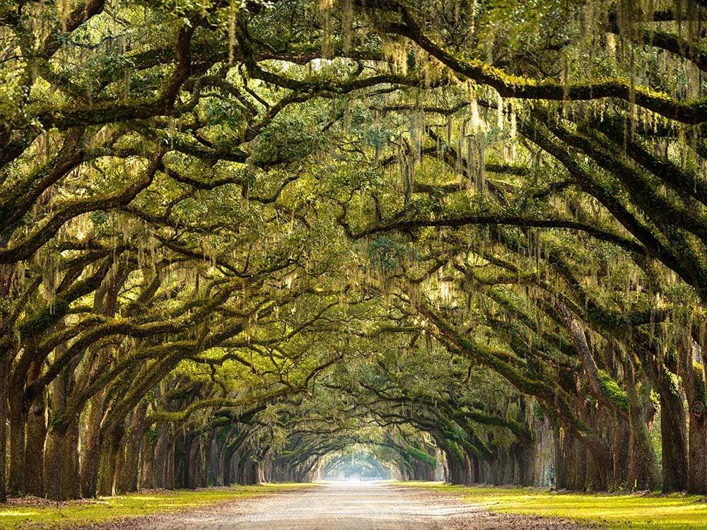 Trees in Savannah, Georgia