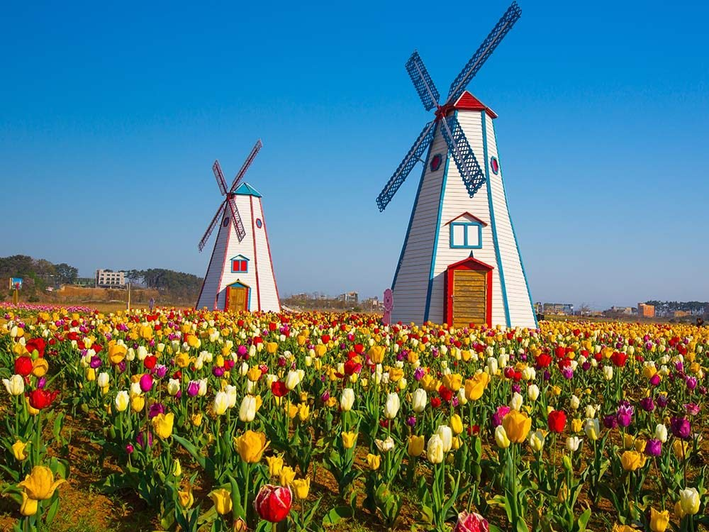 Windmills in Holland, Michigan