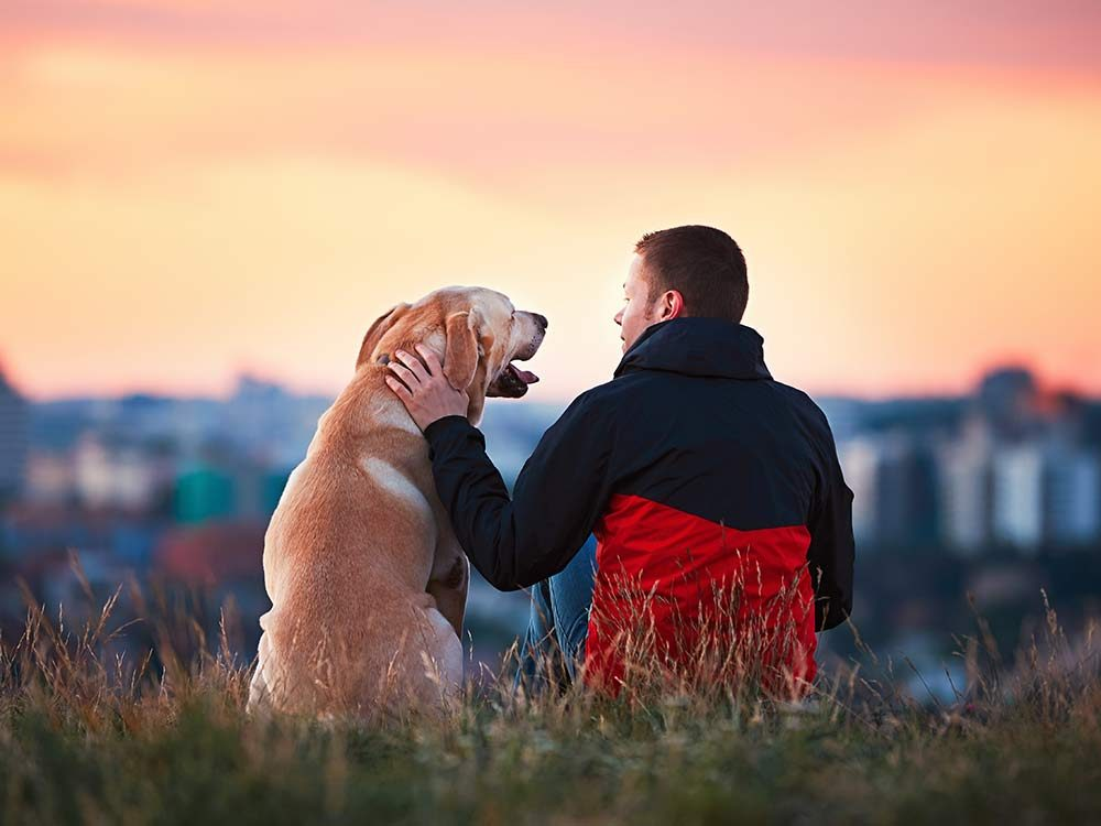 Dog and owner watching sunset together