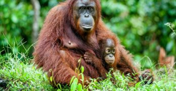 11 Wild Animal Species You Never Knew Were Endangered