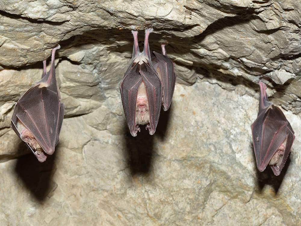 Bats are good luck charms in China
