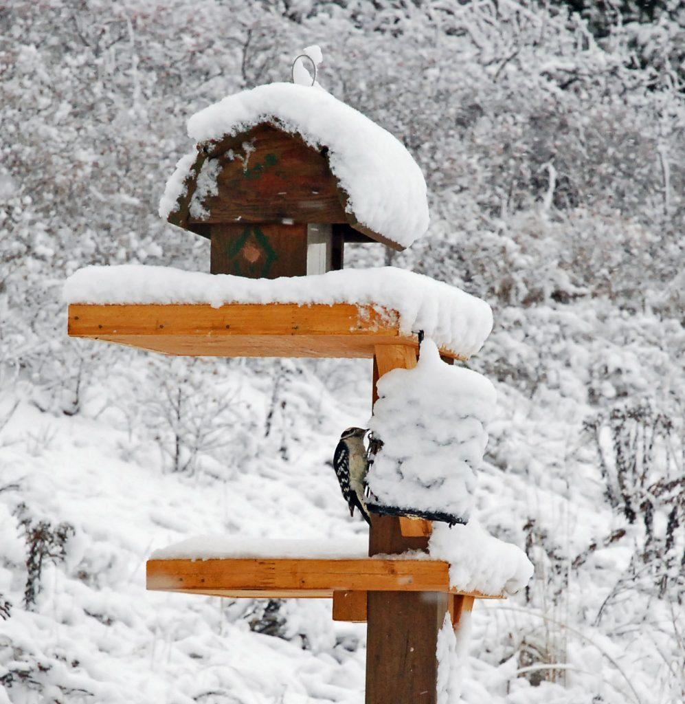 Handmade bird feeder outside in winter with woodpecker