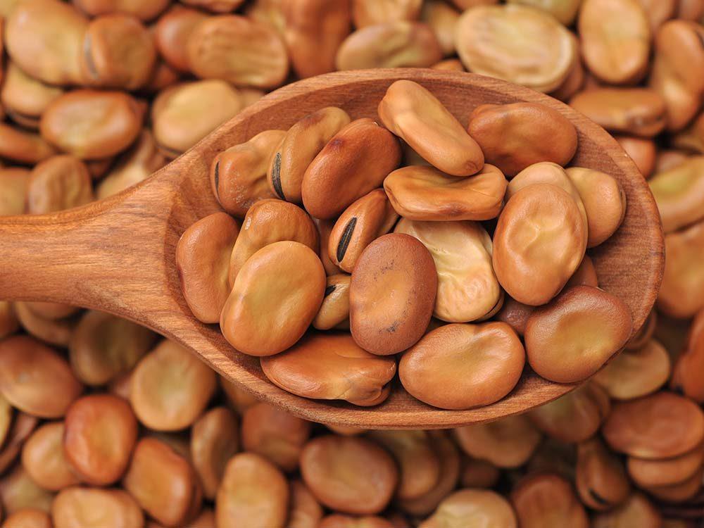 Brown fava beans