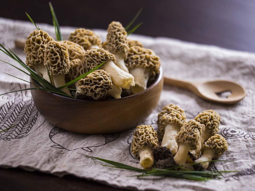 Morel mushrooms in wooden bowl