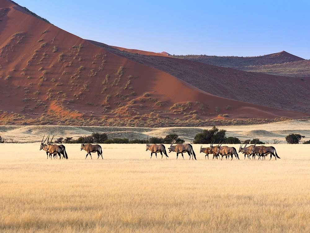 African Safari in Namibia