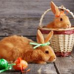 The Real Reason Why Bunnies Are So Popular for Easter