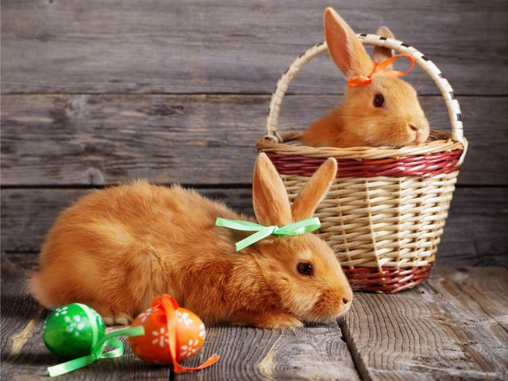 Two Easter bunnies with Easter eggs in basket