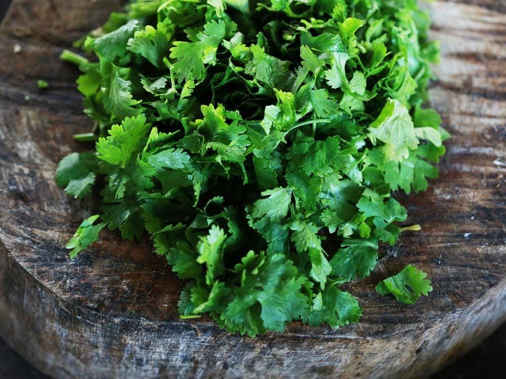 Fresh green cilantro and coriander