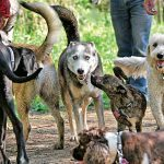 Inside Fergus Dog Park: Ontario's Four-Acre Playground