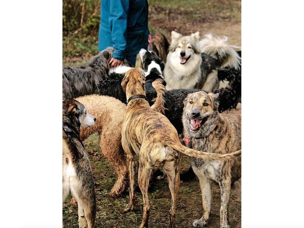 A variety of different dog breeds at the Fergus Dog Park