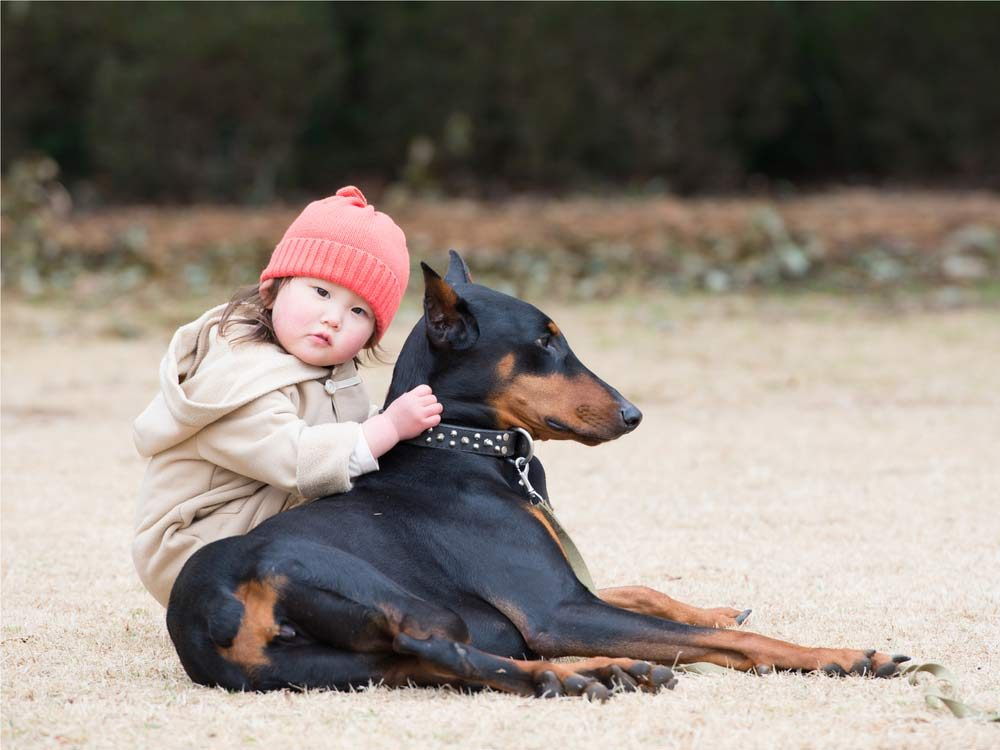 Most large-breed dogs don't need as much exercise as you think