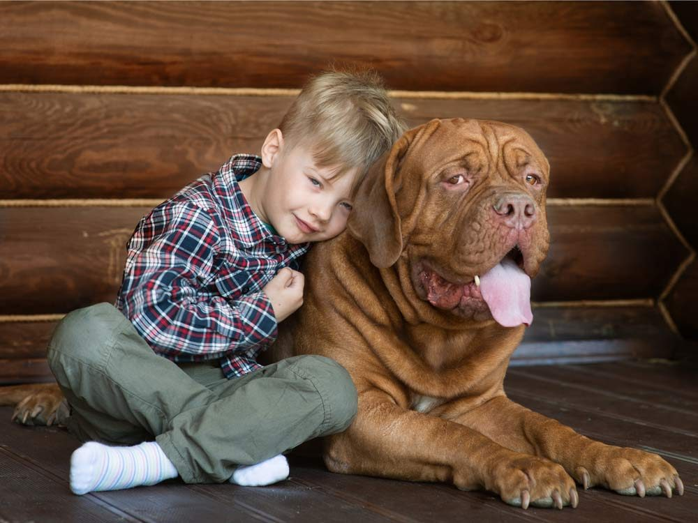 Little boy with giant dog