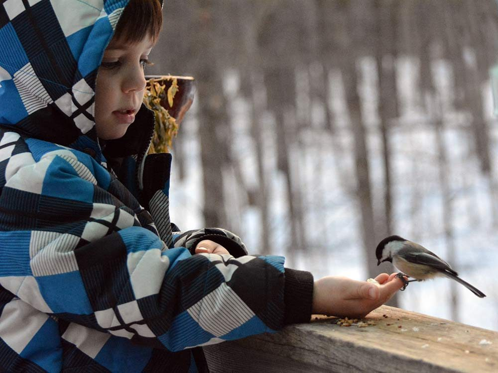 Boy with bird outdoors in the Canadian winter