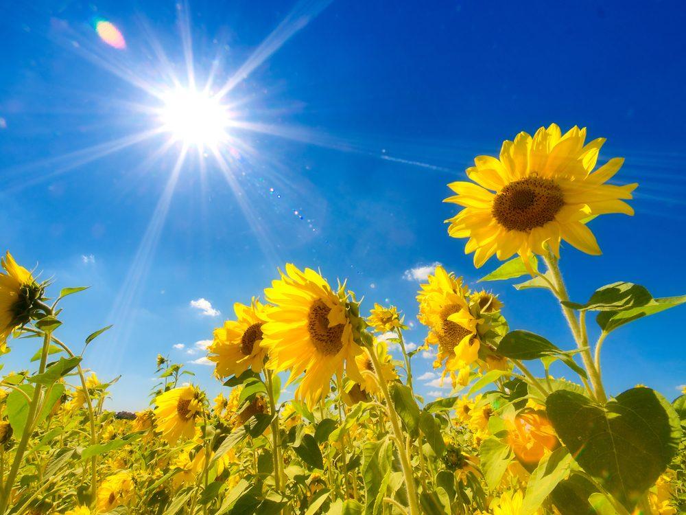 Get-sunshine-everyday