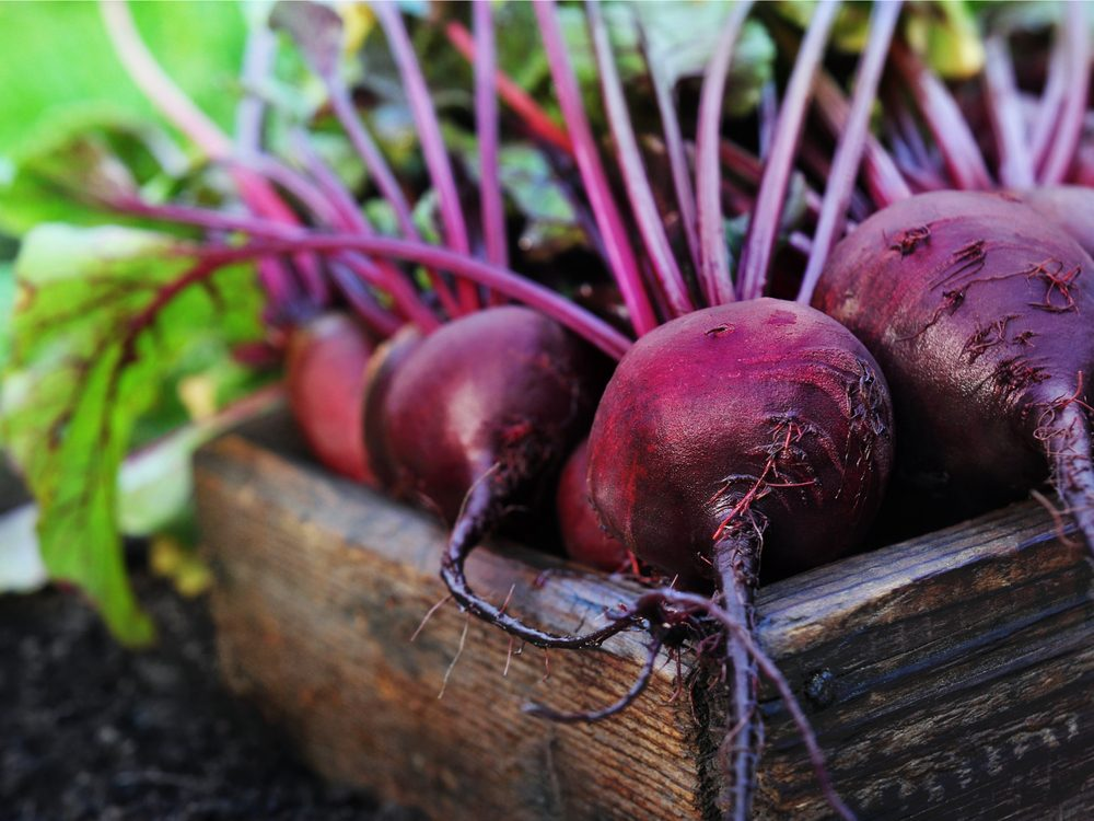 beets-discolor-your-urine