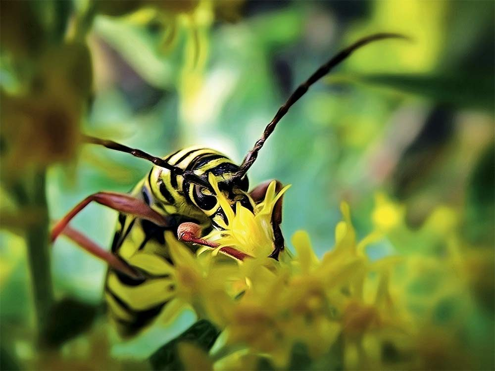 Insect with yellow flowers