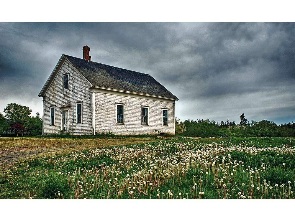 Dandelions surround an old building in Nova Scotia