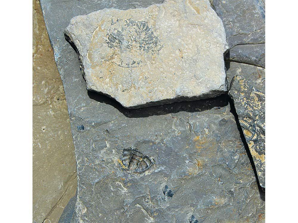 Fossilized sea creatures