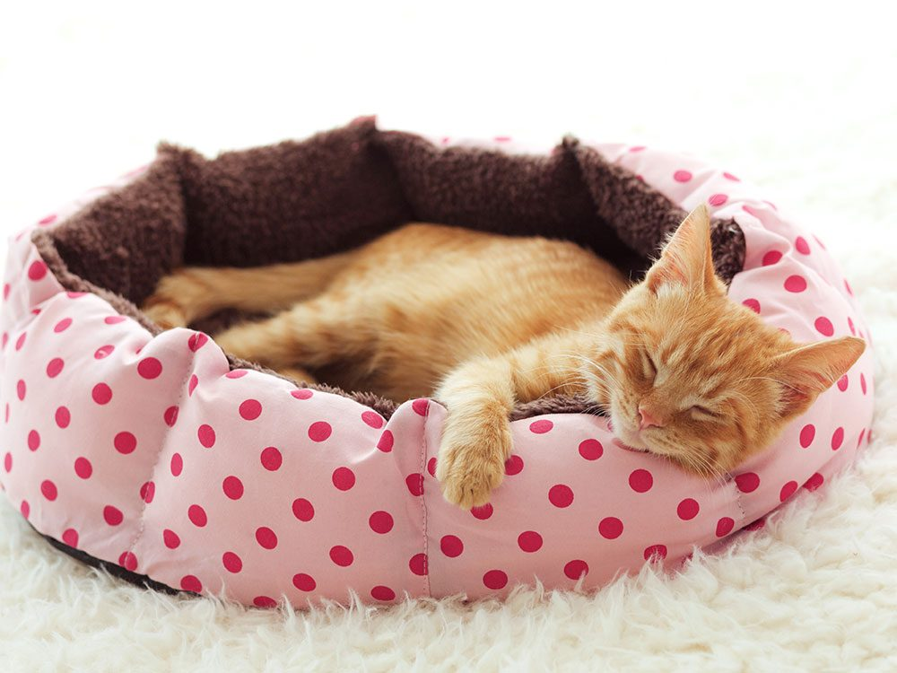 """Don't designate a """"cat room"""""""
