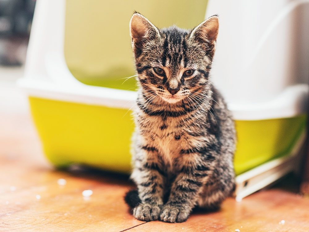 Cats don't like covered litter boxes