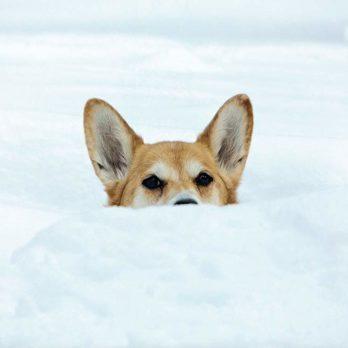 Pet Corner: 13 of Canada's Cutest Animals
