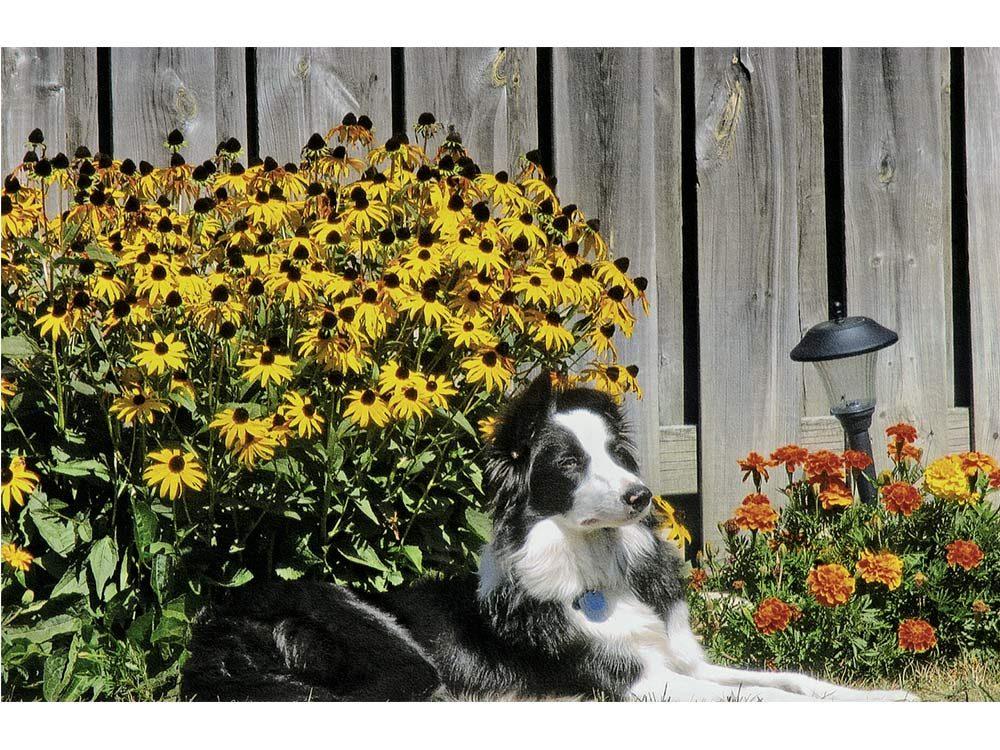 Dog relaxing in garden