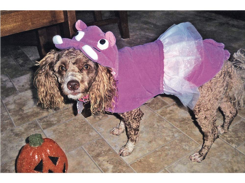 Dog in costume for Halloween