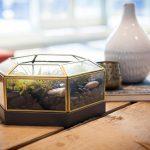 Leigh-Ann Allaire Perrault's Stylish DIY Terrarium