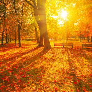 Nature quotes - Autumn forest path