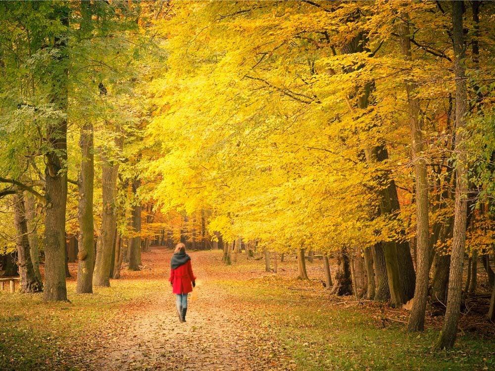 Woman taking a walk in autumn landscape