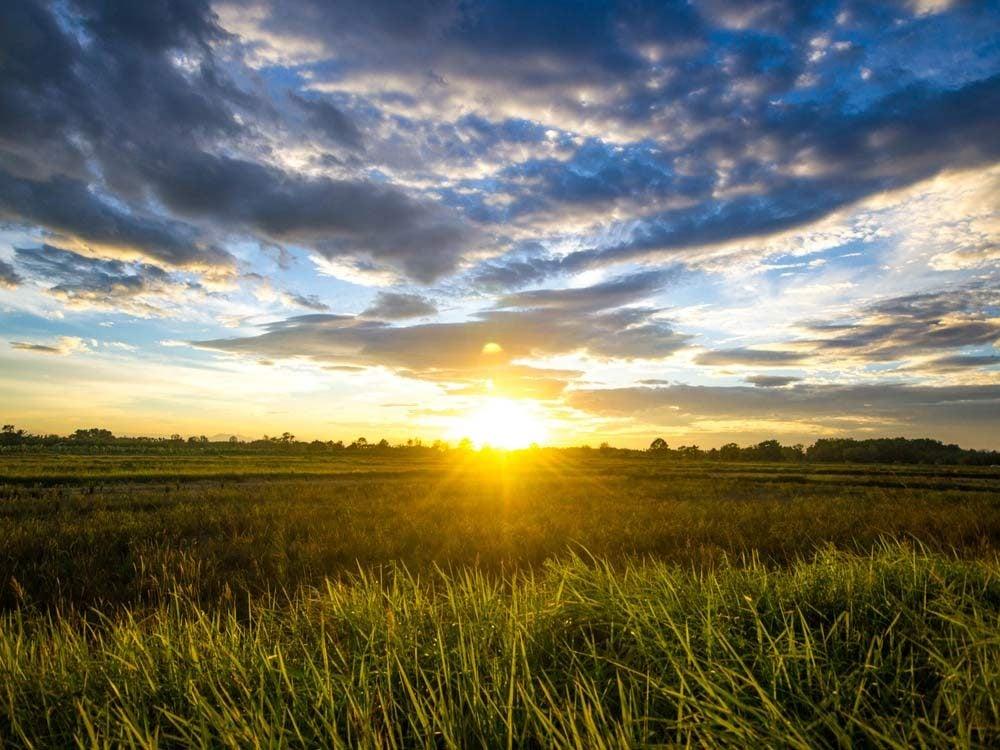 Sunset on field