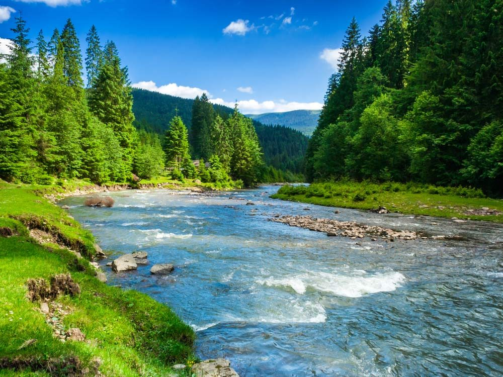 Forest and river landscape