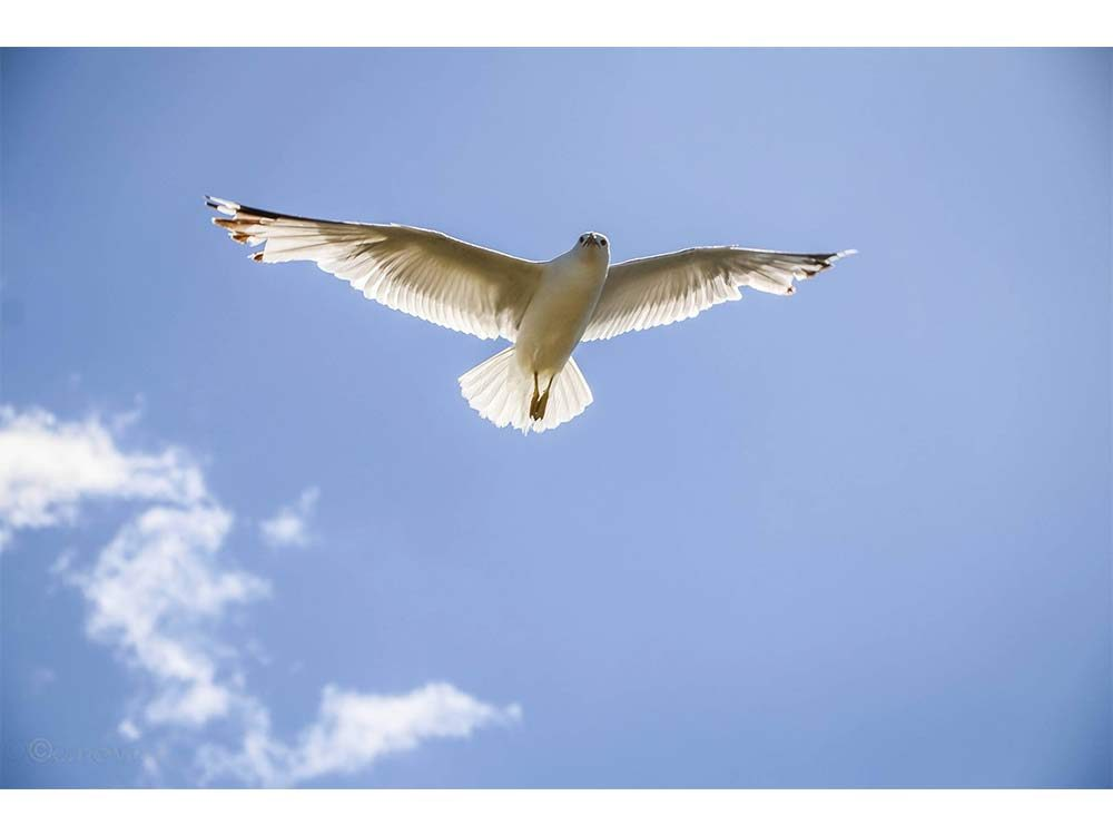 Seagull on the move