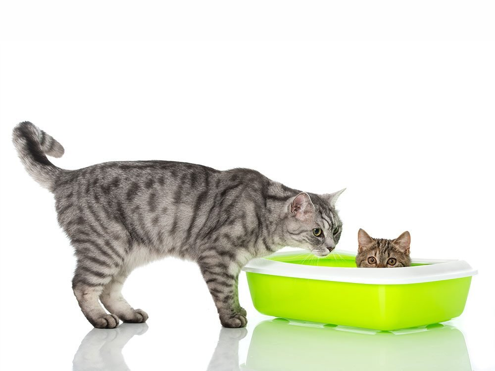 One cat needs two litter boxes