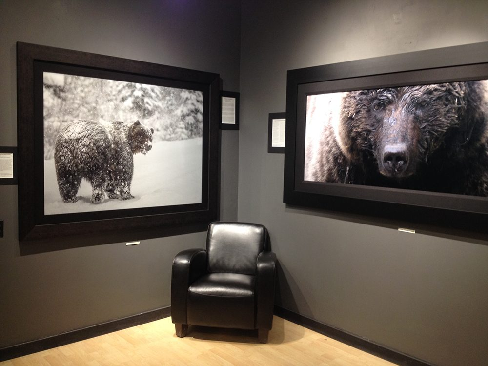 Banff's All in the Wild Gallery