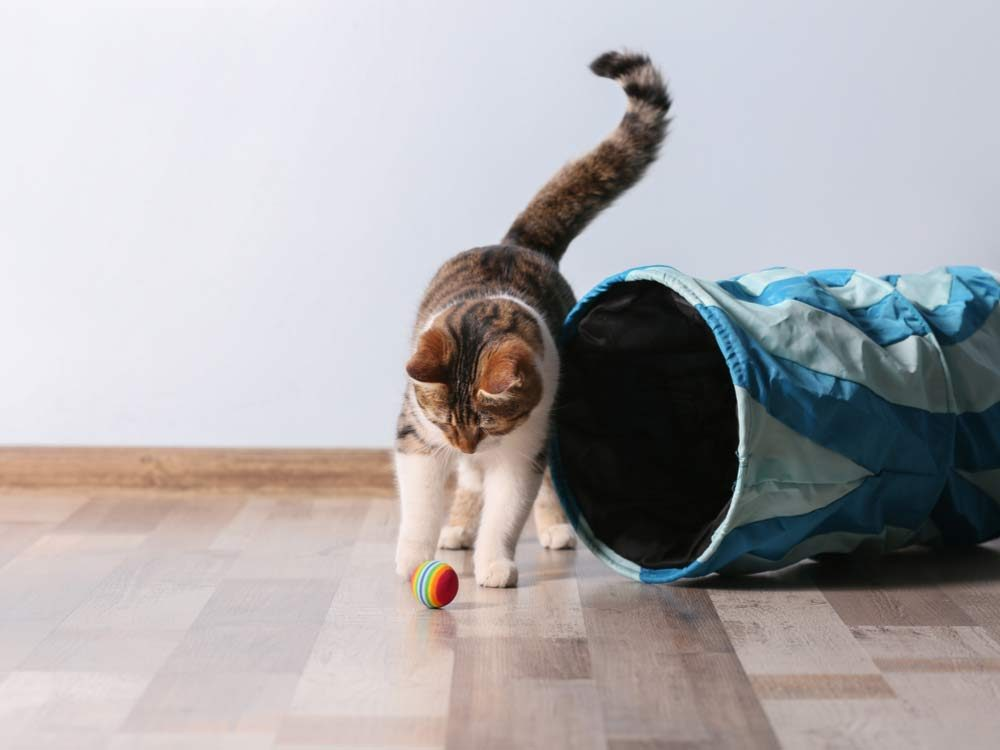 Cats can be hard to evict