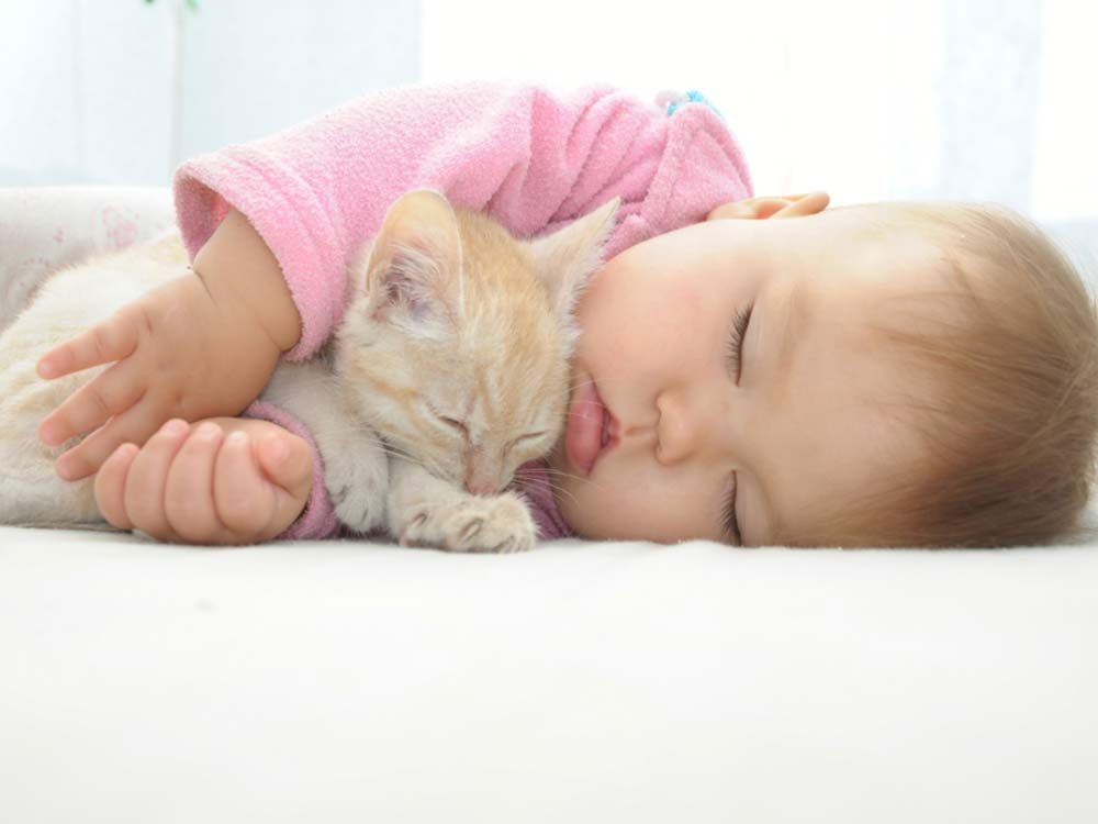 Cats are sometimes a threat to young children