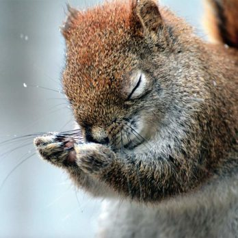 Naturally Funny: 8 Adorable Photos of Canadian Critters
