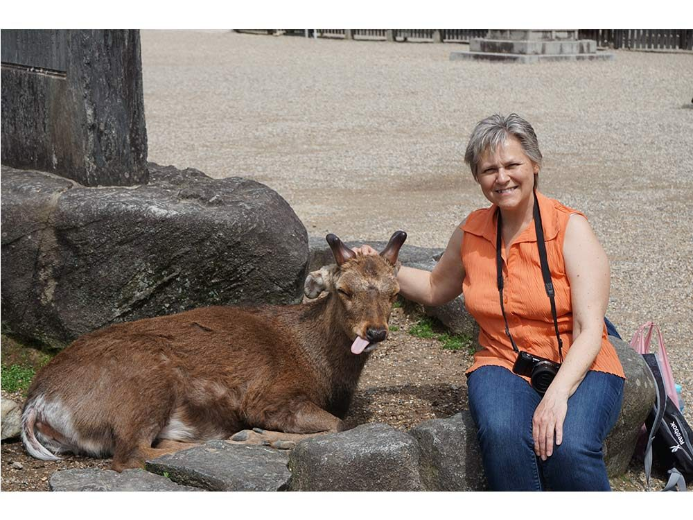 Deer zoo in Japan