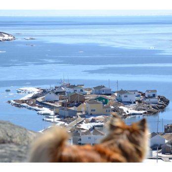 Our Canada Theme Pic Challenge: Photobomb!