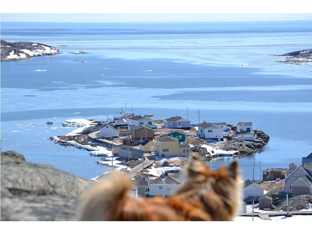 Dog overlooking Harrington Harbour in Quebec