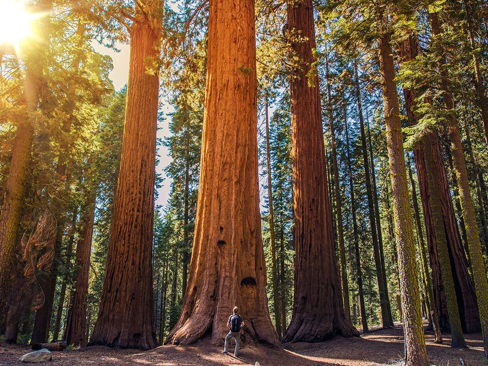 Redwood National Park is one of the world's most awe-inspiring spots