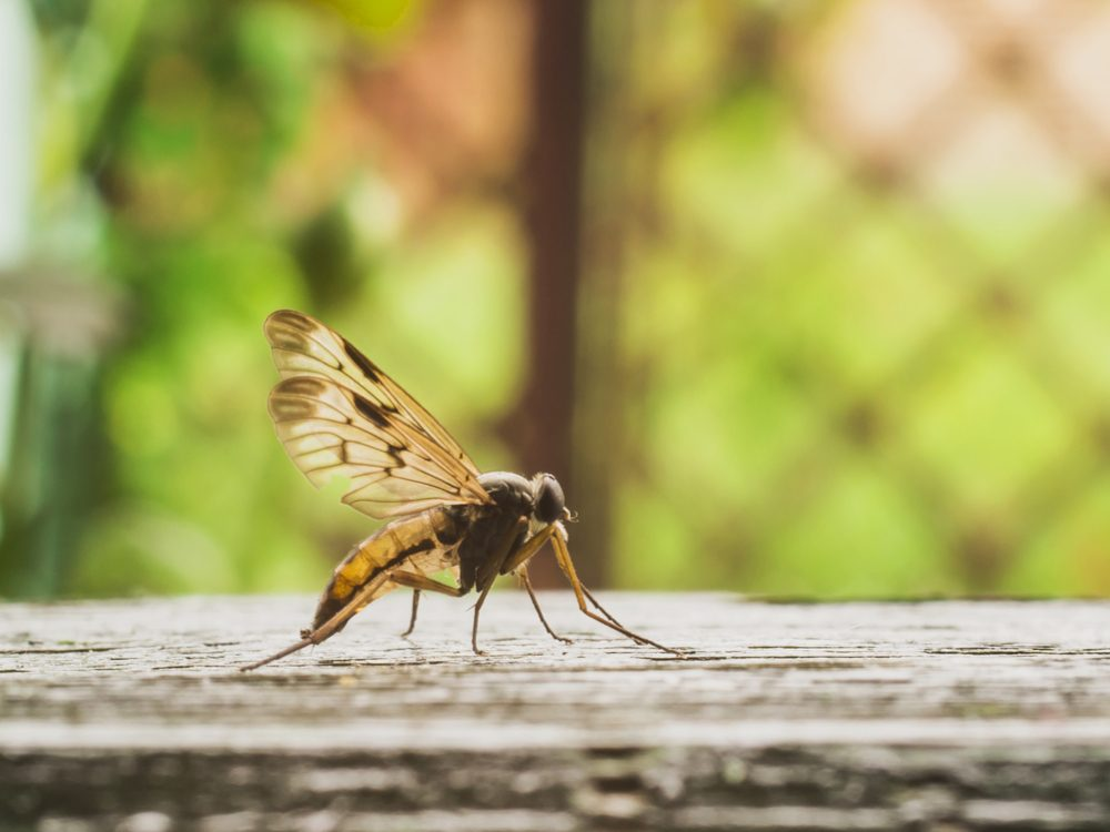 Female mosquitoes bite to breed