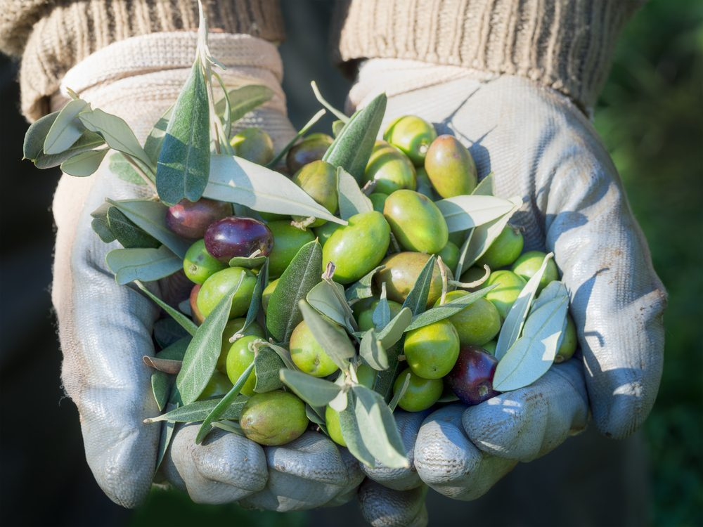 It takes 1,375 olives just to make one 32-ounce bottle of olive oil