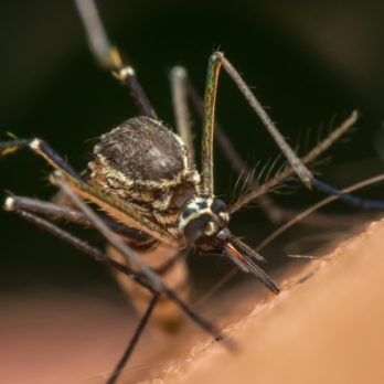10 Reasons Why You're Always Getting Bitten by Mosquitoes
