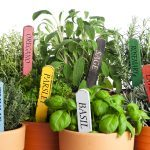 14 Medicinal Herbs You Can Grow in Your Backyard