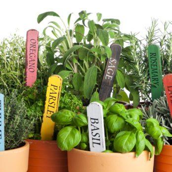14 Medicinal Herbs You Can Grow in Your Backyard