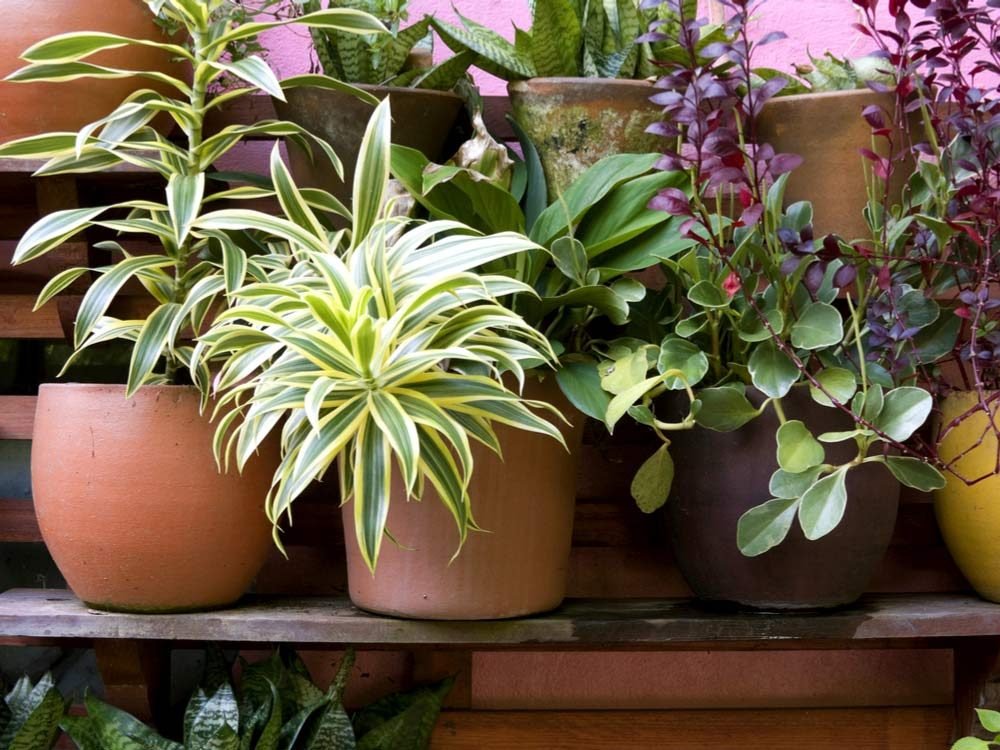 Use mothballs to kill bugs on potted plants